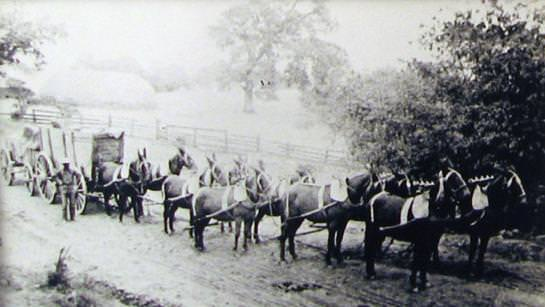 Mules pulling covered wagon.